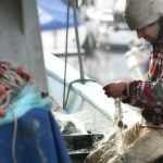The Small but Growing Seafood Traceability Startup Scene