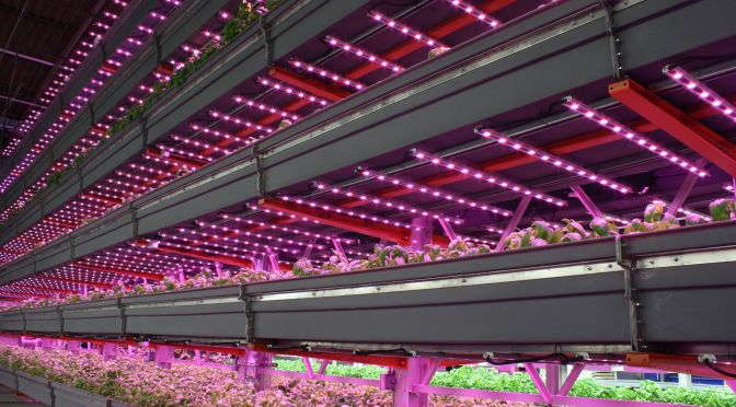 Circular Economy and True Sustainability: the Next Phase for Vertical Farming