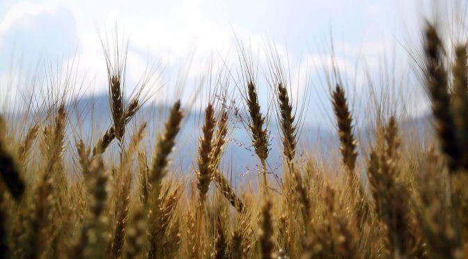 Finistere Ventures and International Farming Corp Open New Growth Capital Agtech Fund