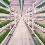 Association for Vertical Farming to Reveal Sustainability Certification Scheme at Summit