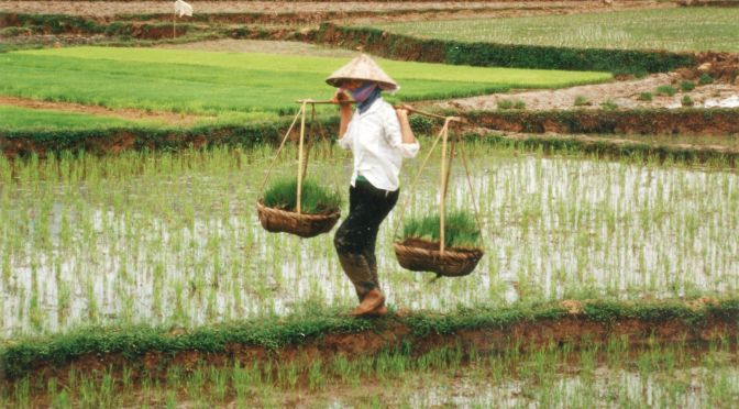 Farmer_in_Vietnam