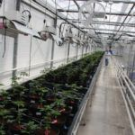 Canadian Cannabis Hybrid Greenhouse Company Raises $3.6m