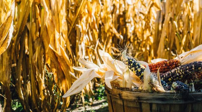 Are the Good Times Really Over for Good? The Future Direction of the US Ag Industry