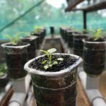 Agrilyst's Kopf Talks Indoor Ag in New York and Funding Advice for Startups