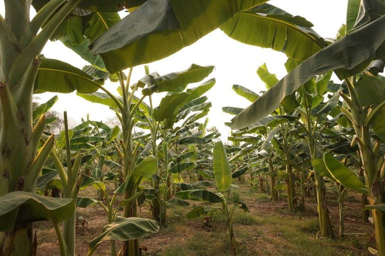 agribusiness innovators in southeast asia