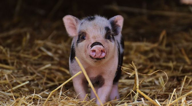 EU PiG Innovation Group Launches to Stop Member Countries Repeating New Tech Research, Award EU PiG Grand Prix