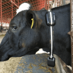 Japan's Farmnote Raises $4.6m for IoT Device and Data Analytics in Livestock Farming