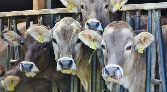 Land O'Lakes Hopes to Boost Animal-Based Dairy with Startup Accelerator in Face of Alternative Competition