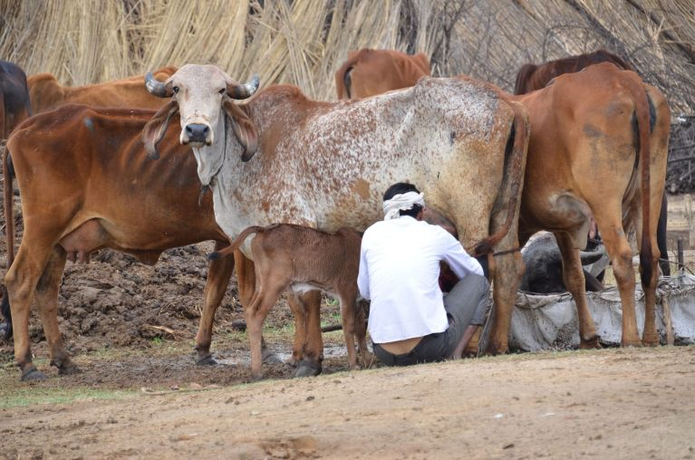 India Dairy