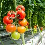 Prospera Raises $15m Series B from Qualcomm and Cisco for Ag IoT