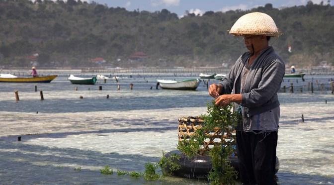 Algae market