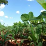 Crop Protection: Biologicals Integrated with Chemicals