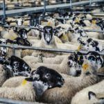 Report: New Survey Reveals How Little We Know About Global Livestock Antibiotics Use