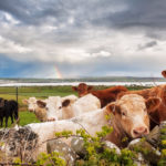 The Technological Answer to Ireland's Growing Dairy Industry