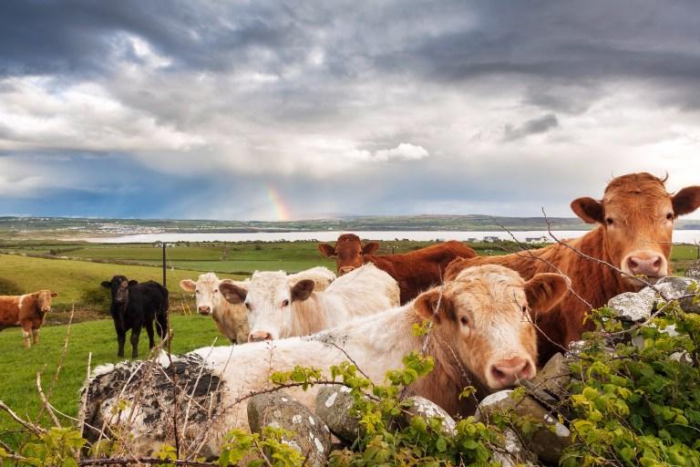 Ireland Dairy