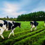 BREAKING: Ireland Strategic Investment Fund Invests €40m in Agtech with Finistere