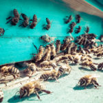 Beehive Management Tech Raises Series A To Avoid Hive Loss