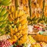 Report Reveals 22 Most 'Investible' Post-Harvest Food Waste Technologies
