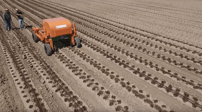 BREAKING: FarmWise Raises $5.7m Seed Round for Vegetable Weeding Robot