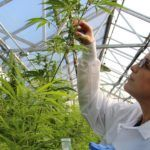 Women in Agtech: Wendy Mosher of New West Genetics on Women in Cannabis