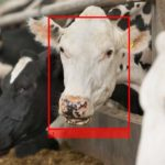 BREAKING EXCLUSIVE: Cargill Backs Livestock Vision Tech Cainthus