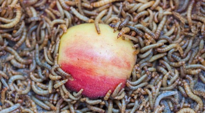 BREAKING EXCLUSIVE: Wilbur-Ellis Invests in Insect Startup Beta Hatch After Customers Demand Fishmeal Alternative