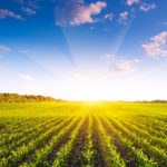 AgFunder Starts Investing in FoodTech and Agtech