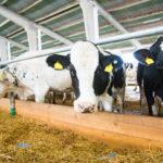 Nine Dairy Farm Tech Startups Seeking to Bolster a Troubled Industry