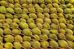 future food asia