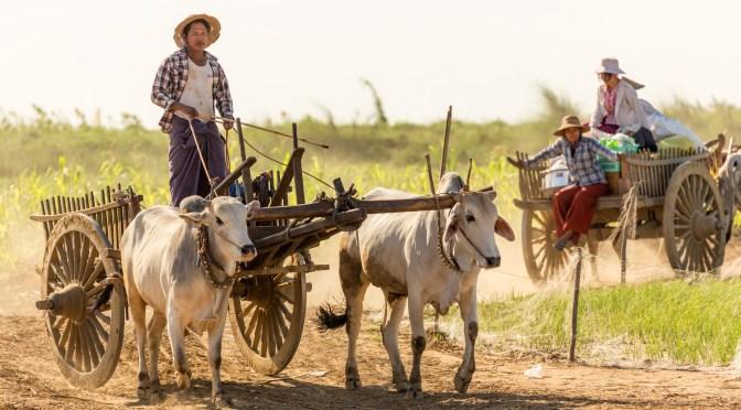 Social Enterprise Raises $3m to Digitally Support Smallholder Farmers in Myanmar