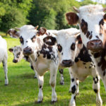 Seventure Partners and Adisseo Launch €24m Livestock Tech Fund