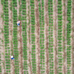 Ag Industry Brief: Drones and Ag Inputs See M&A, Indoor Growers Form Safety Working Group, Corporate VC Staff Shift, more