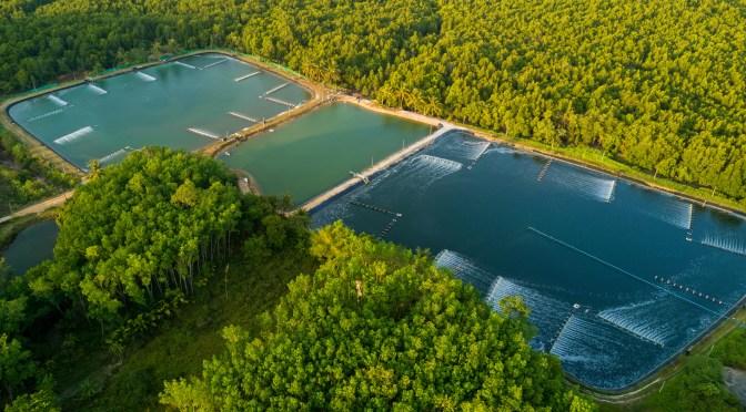 Cargill aquaculture
