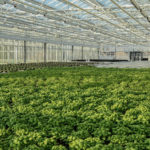 BIGH Raises €4.3m for Largest Urban Rooftop Farm in Europe