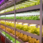 Japan's Indoor Ag Sector is Becoming More Collaborative