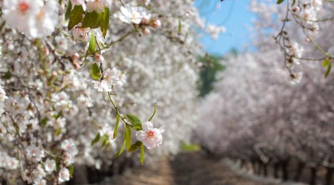 Edete Raises $3m for Bee-Free Pollination Tech