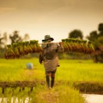 Gates-Backed Ricult Raises $1.85m to Improve Smallholder Farmer Profitability with Digital Tech Platform