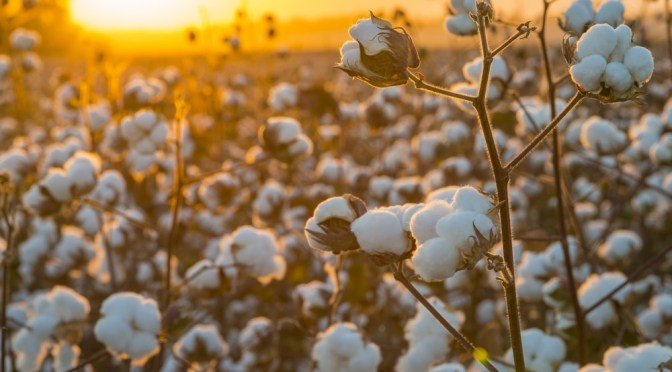 Indigo Ag Makes Bid to Become Agtech Marketplace, Launches Ag Data Platform