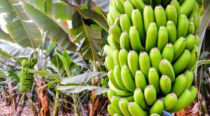 Tropic Biosciences Raises $10m Series A for Tropical CRISPR Tech