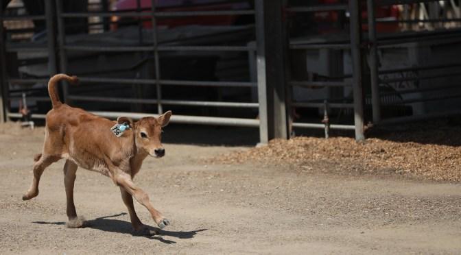 HerdDogg Raises $2.3m Seed Round for Livestock IoT