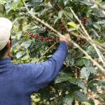 Embracing Digital Agriculture: Coffee's Fourth Wave?