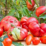 Full Harvest Raises $8.5m Series A for Food Waste Marketplace