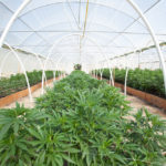 Meet the Largest Multi-State Cannabis Company You've Never Heard Of