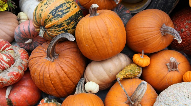 Where Do Halloween Pumpkins Come from Anyway — and More Importantly, Where Do They Go?