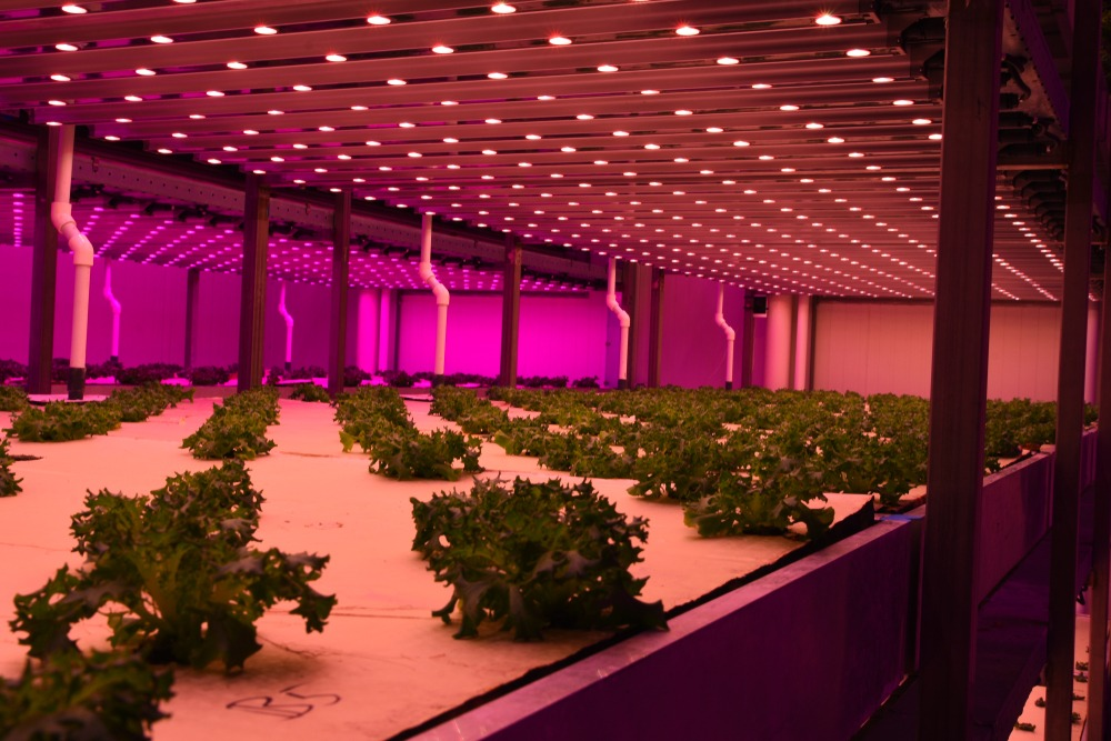 led grow light technology