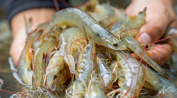 EXCLUSIVE: Singapore-based VisVires New Protein Invests in Israeli startup ViAqua to Combat Viral Infections in Aquaculture