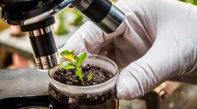 Ag Biotech Startups: Hi Fidelity Genetics & PlantResponse Raise Venture Funding Totaling $15.4m