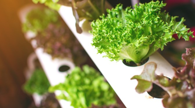 Canadian Automated Vertical Farm Systems Developer Inno-3B Raises C$6m Seed Funding