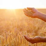 FarmLogs Launches AutoHedge App to Help Farmers Market Their Grain Before Harvest