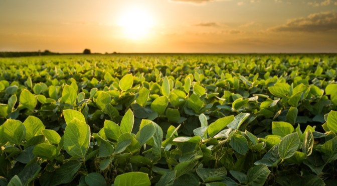 Cultivating Agtech Leadership for Established Row Crop Leaders